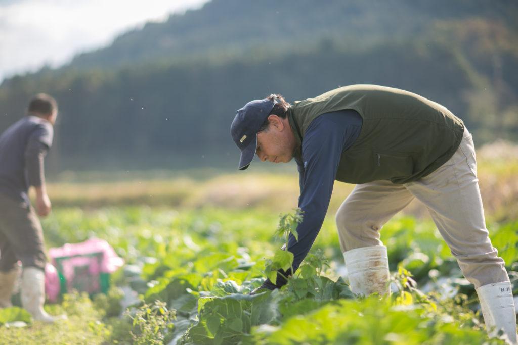 化学肥料なしで育てた秋川牧園の無農薬野菜